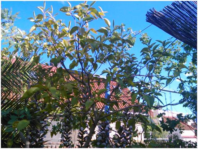 Malasaña verde